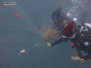 Christmas Net Removal at Downbelow