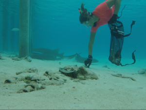 freediving clean up with the nurse sharks in Staniel Cay