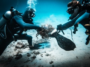 Underwater clean up - Dive against debris