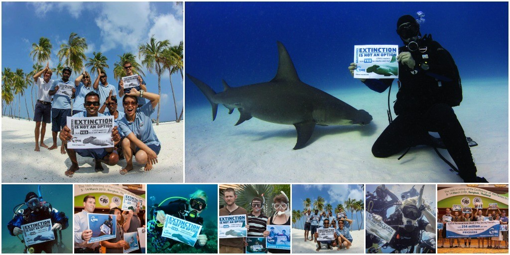 Photo collage of CITES CoP16 - Divers Extinction is NOT an Option