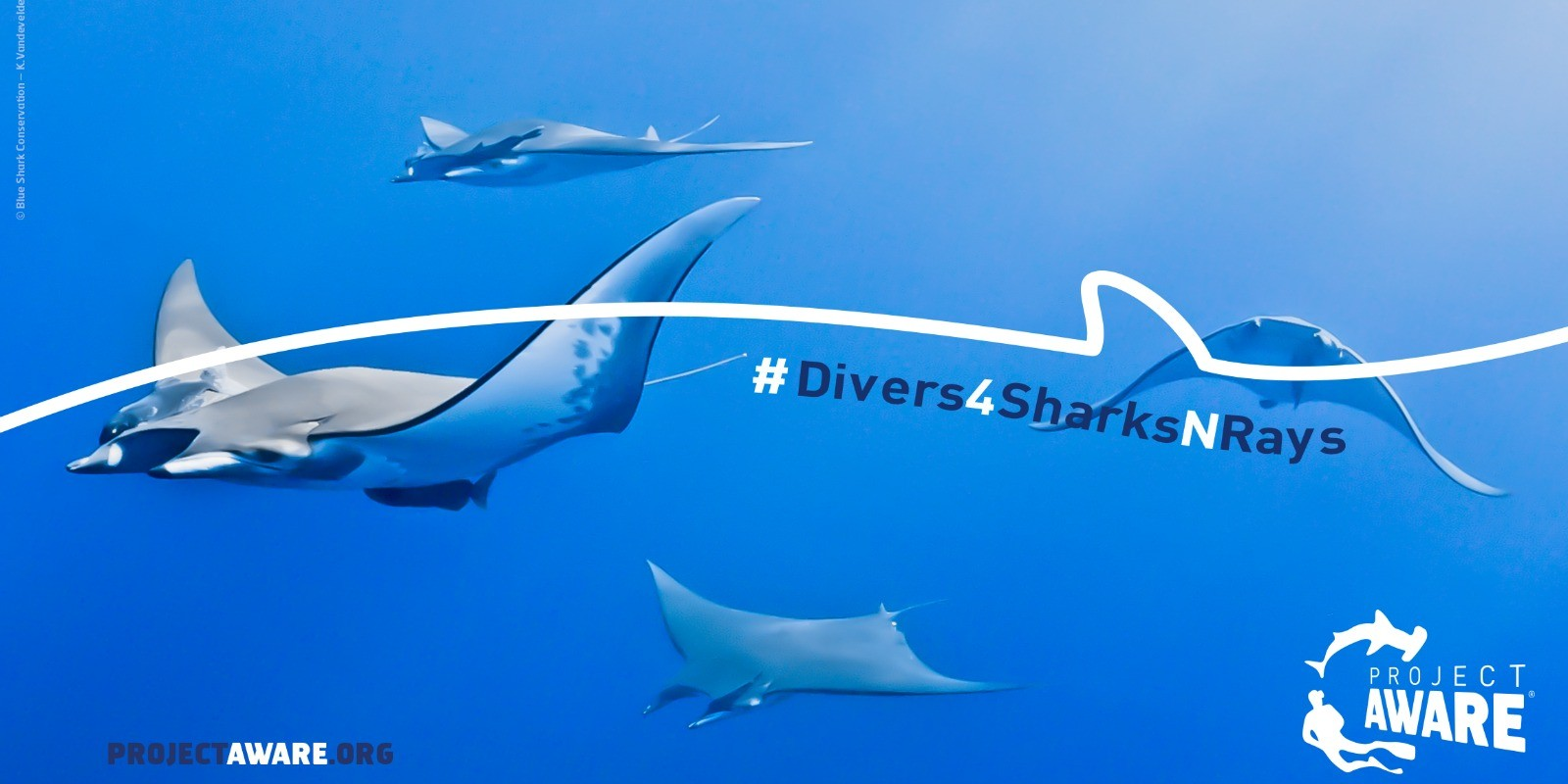 Divers4SharksNRays