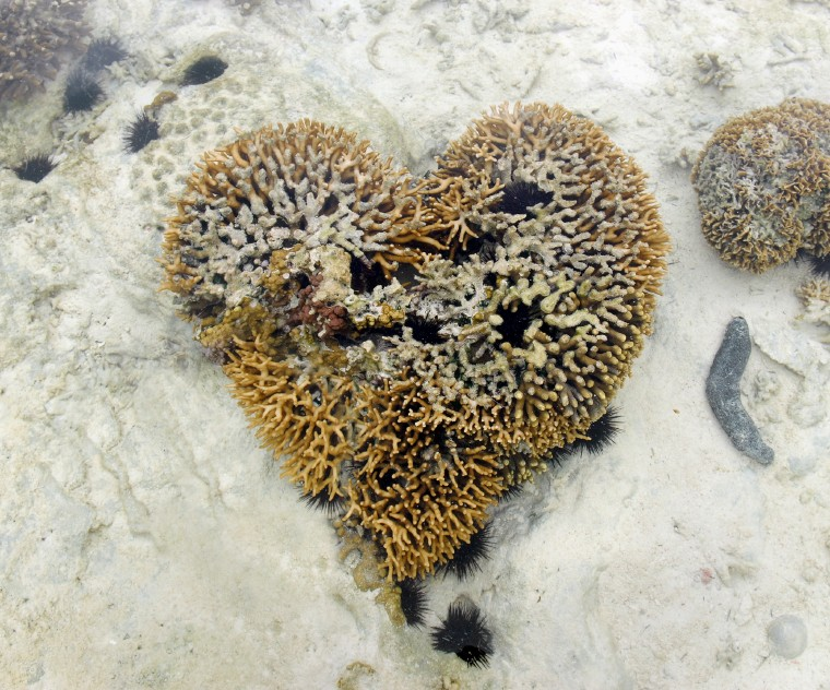 Image of heart coral