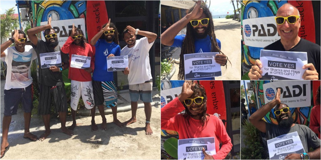 Image of #Divers4SharksNRays photo collage from the Maldives