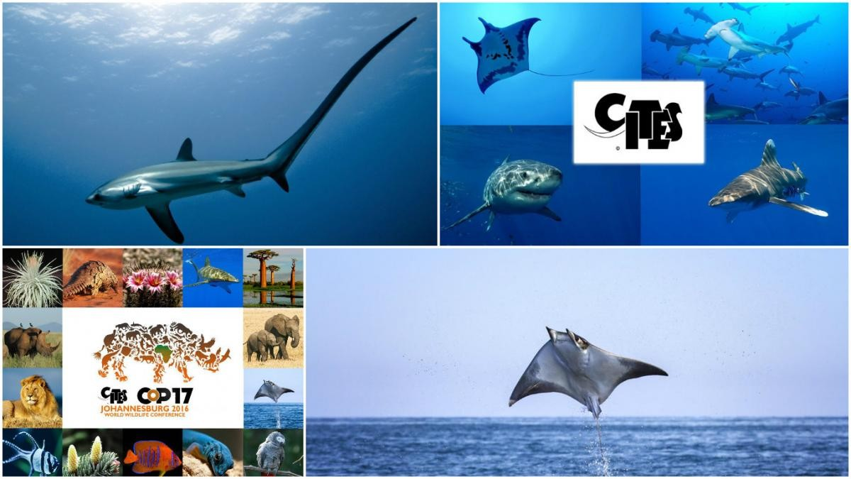 Image of CITES CoP17 - Sharks and rays over the years