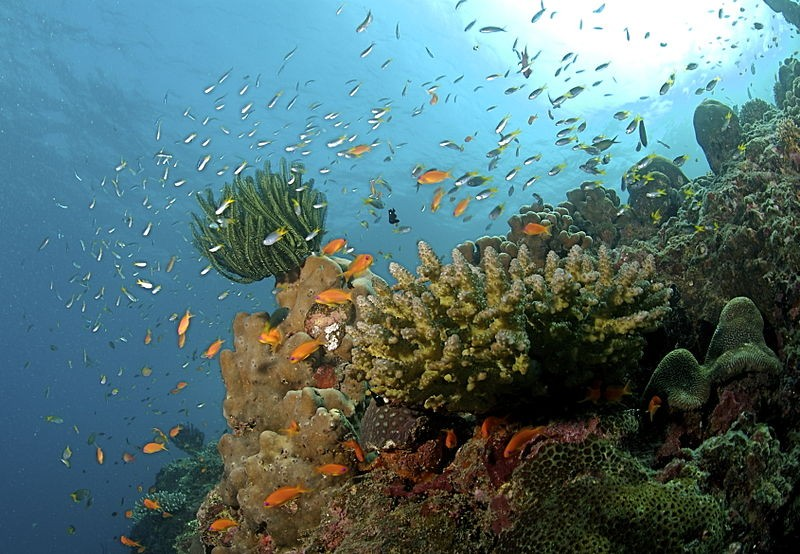 Image of Coral Reef at the Andaman Islands