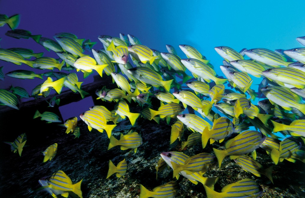 image of school of fish