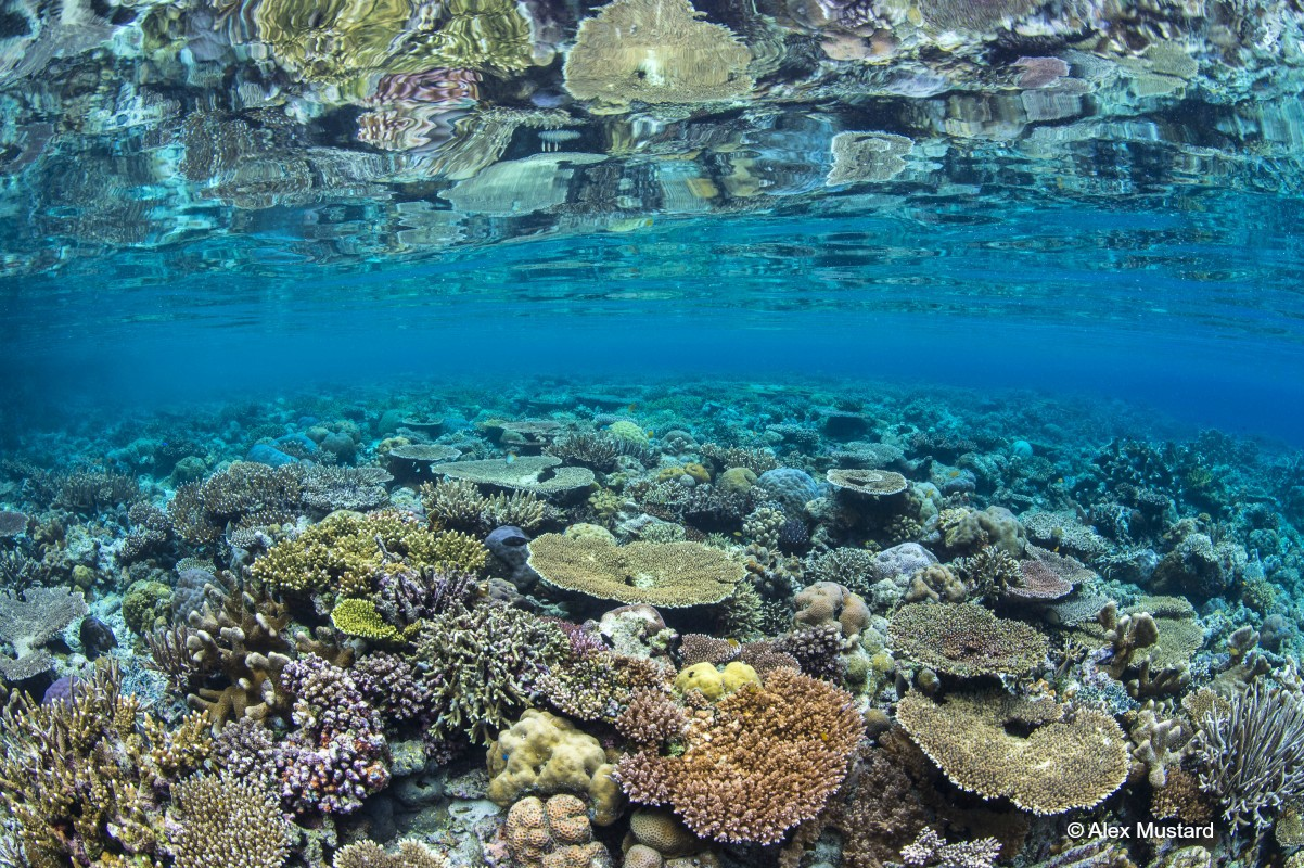 image of coral reefs Raja Ampat by Alex Mustard