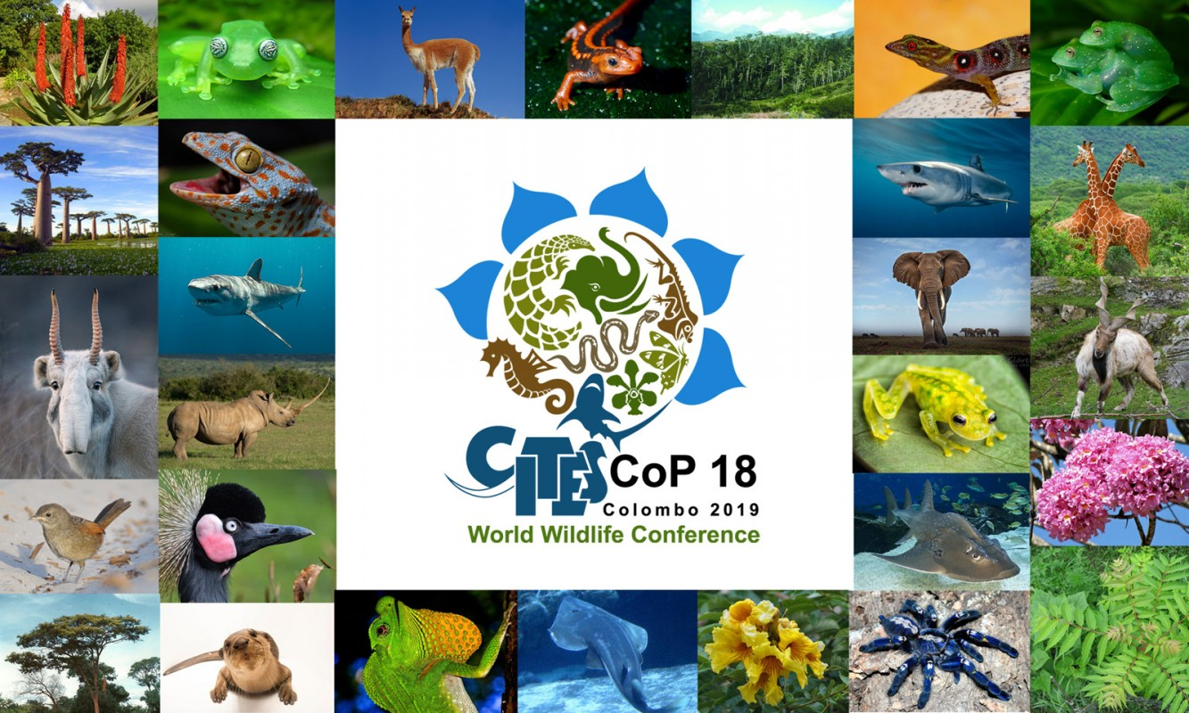 image of cites cop18 banner