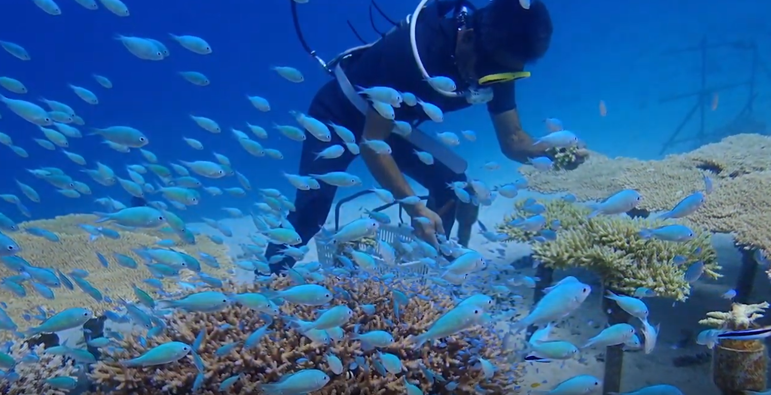 image of coral reef restoration padi japan