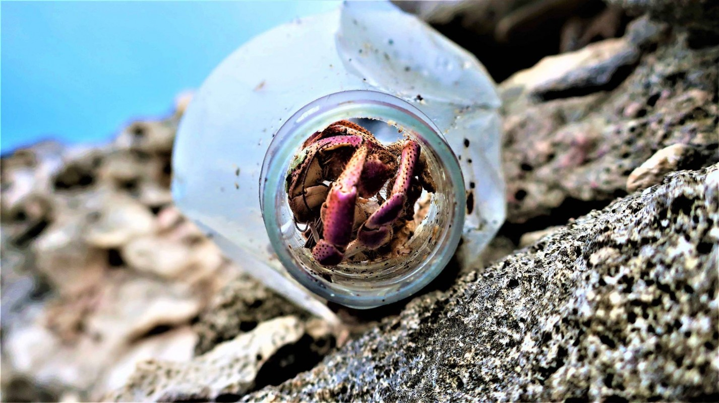 image of crab in a plastic bottle