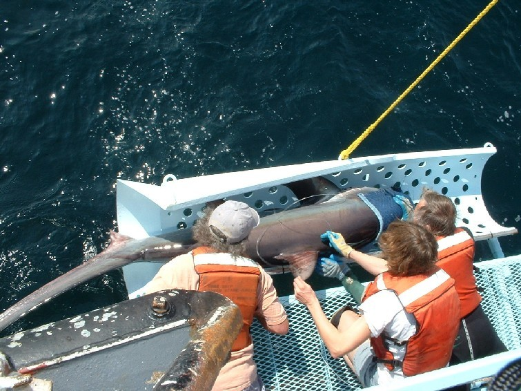 image of shark inspection