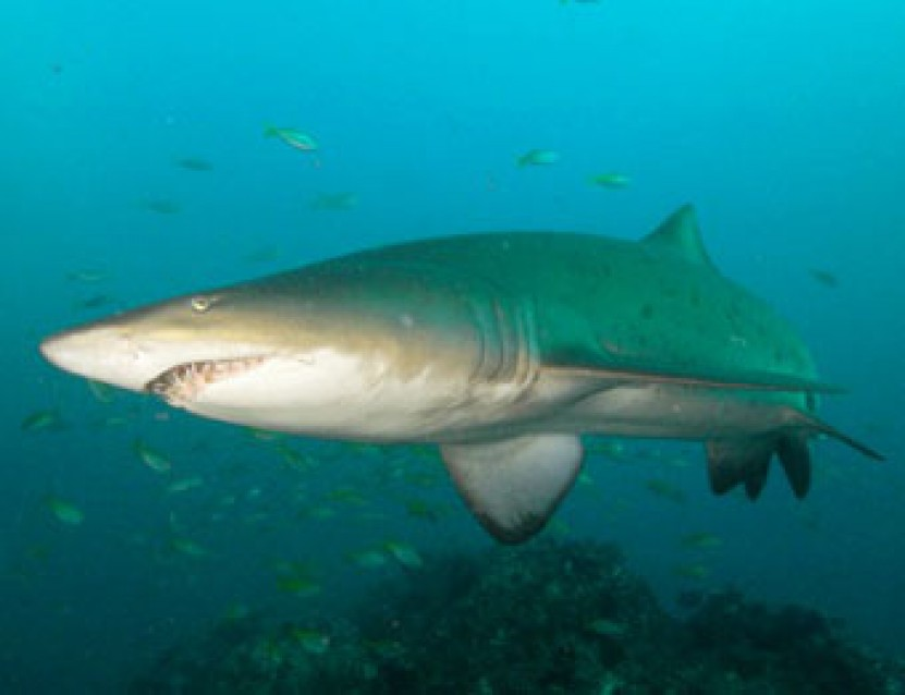 New AWARE Shark Conservation Divers | Project AWARE