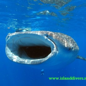 Profile picture for user Island Divers Maldives