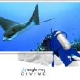 Profile picture for user Eagle Ray Diving