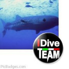 Profile picture for user IDive Makadi Bay