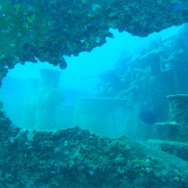 Profile picture for user Coral Point Diving
