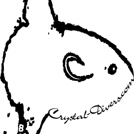 Profile picture for user crystal divers