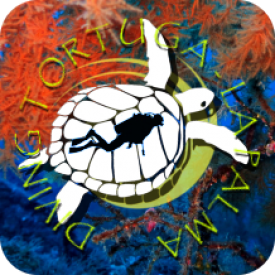 Profile picture for user Diving Tortuga