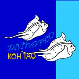 Profile picture for user DivingProkohtao