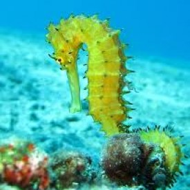 Profile picture for user Jayakari the seahorse