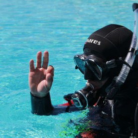 Profile picture for user Explora Madeira Diving Center