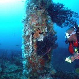 Profile picture for user Aquanauts Grenada