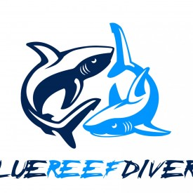 Profile picture for user Bluereefdivers