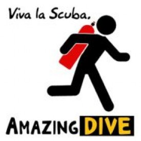 Profile picture for user amazingdive