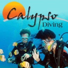 Profile picture for user Calypso Diving Resort
