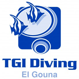 Profile picture for user TGIelgouna