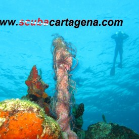 Profile picture for user Scuba Cartagena