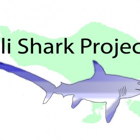Profile picture for user Bali Shark Project
