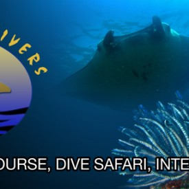 Profile picture for user Bali Breizh Divers