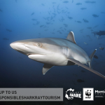Image of shark and ray tourism guide