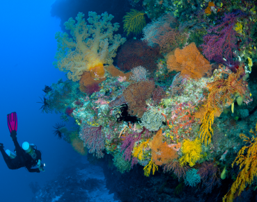 Have Your Say. Help Restore the National Network of Marine Sanctuaries in Australia