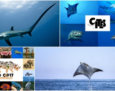 CITES for Sharks and Rays over the Years