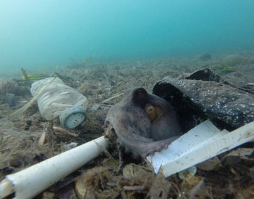 New UN report finds marine debris harming more than 800 species, costing countries millions