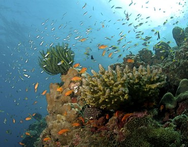 UN Calls for Commitments to Safeguard the World's Oceans Ahead of First Major Conference