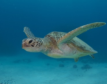 Say no to the cutbacks for Australia's National Network of Marine Sanctuaries.