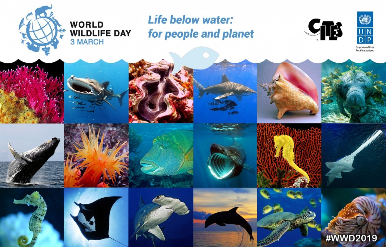 image of world wildlife day 2019 banner