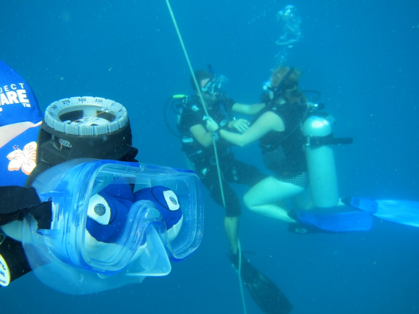 PADI Open Water Dives 1, 2, 3 & 4! | Project AWARE